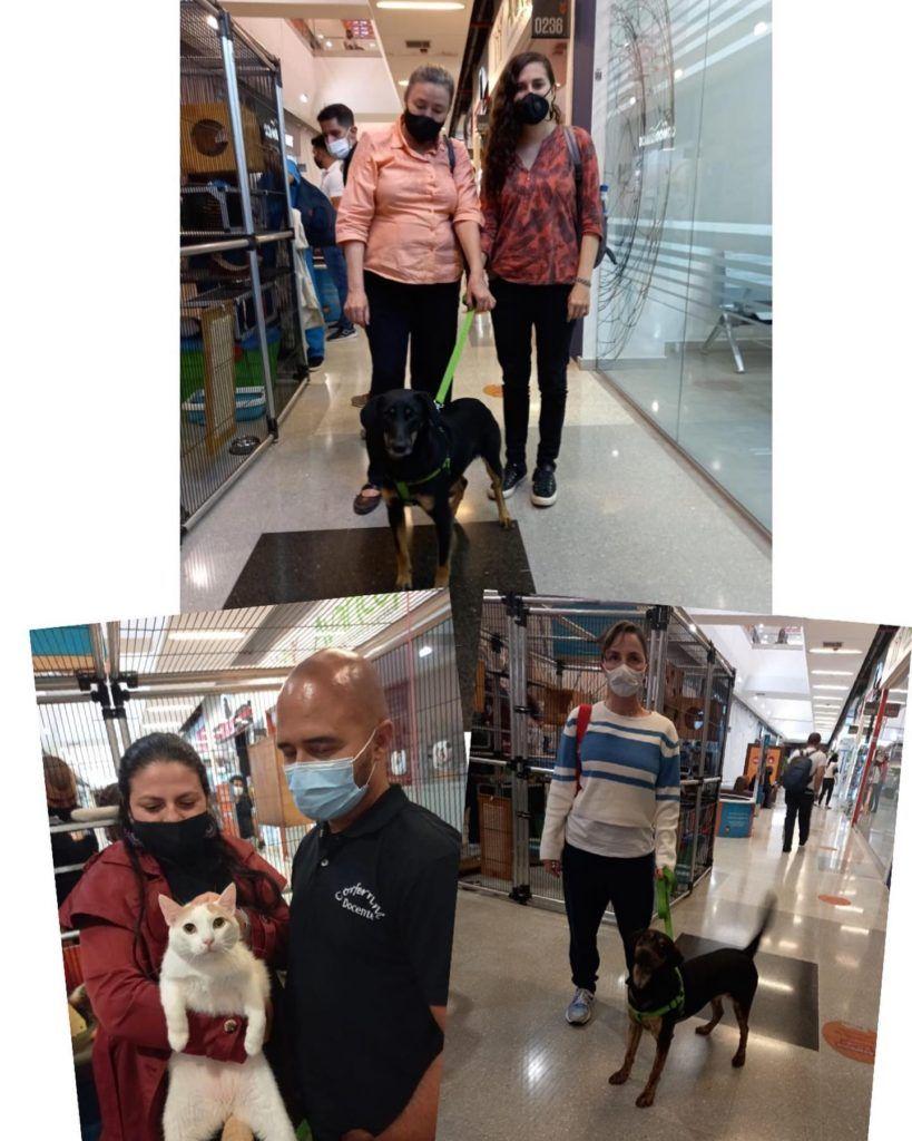 Gatitos y Perros CC Aventura